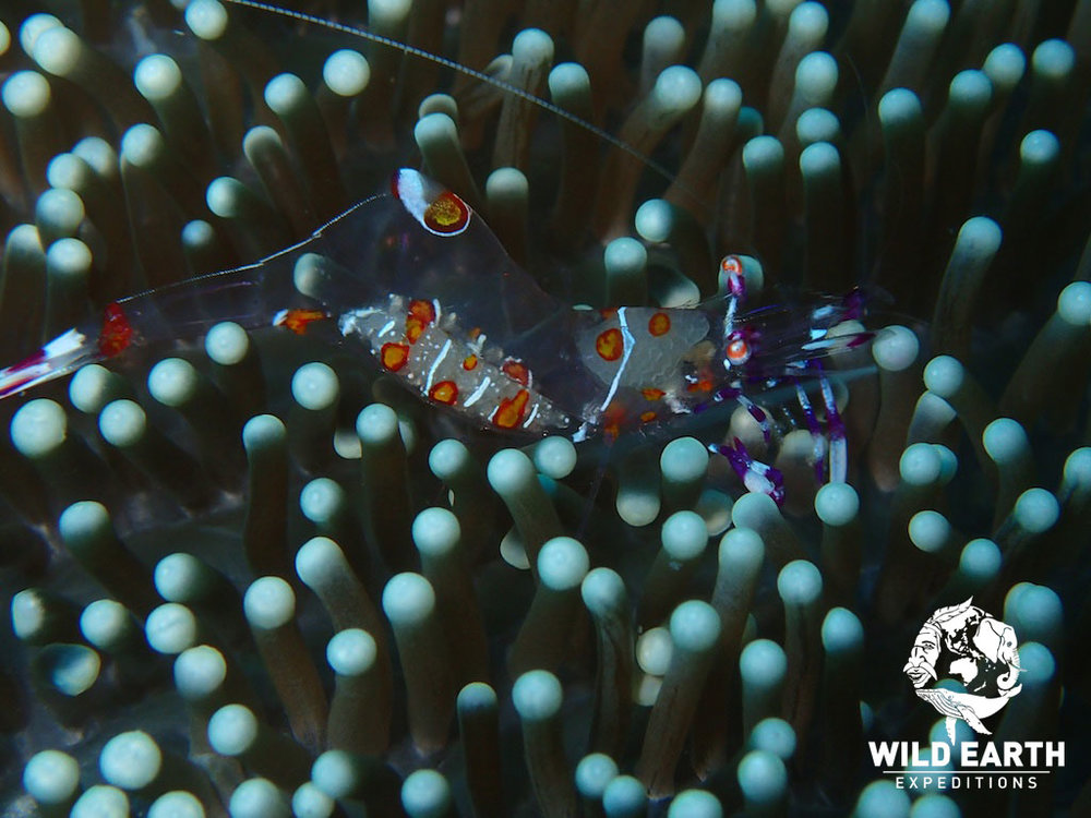 PHL_Dauin-UW-Atmosphere-House-Reef-©18-Robin-Aiello-006.jpg