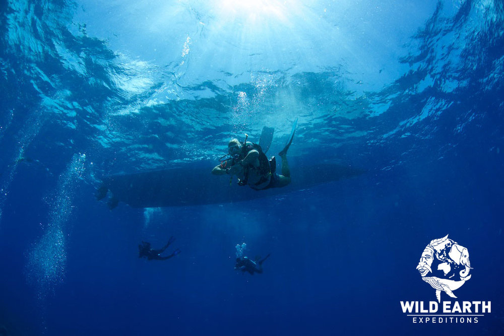 Returning to the surface - Palau - Wild Earth Expeditions
