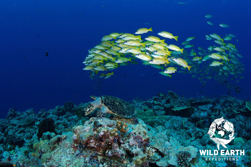 Reef life - Palau - Wild Earth Expeditions