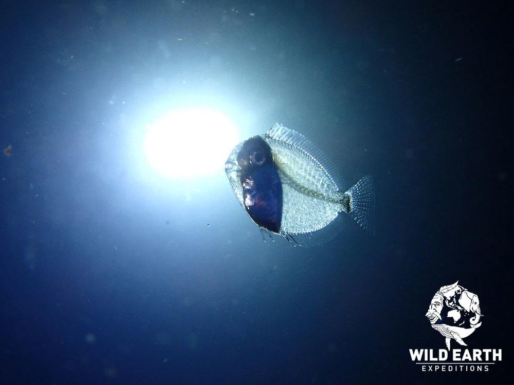 PLW_Turtle-Cove-UW-Black-Water-Dive-©18-Robin-Aiello-001.jpg