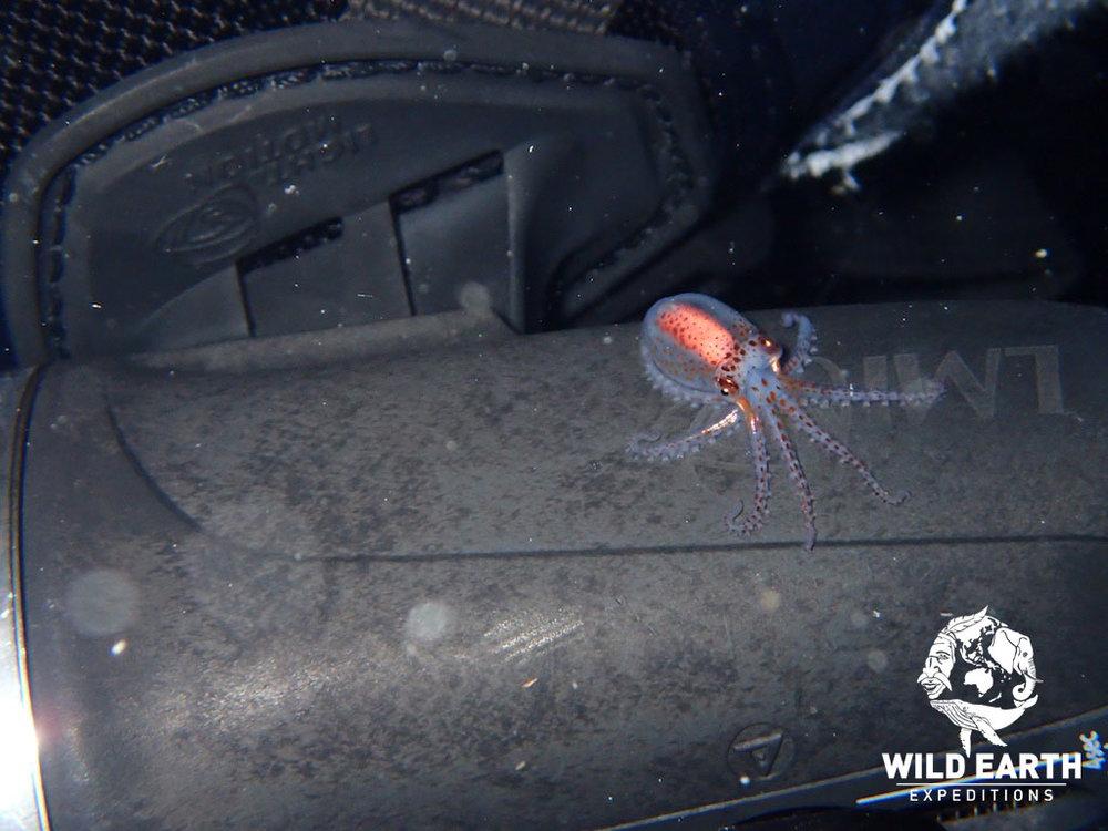 PLW_Turtle-Cove-UW-Black-Water-Dive-©18-Robin-Aiello-007.jpg