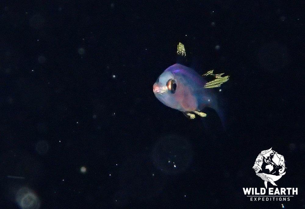 PLW_Turtle-Cove-UW-Black-Water-Dive-©18-Robin-Aiello-013.jpg