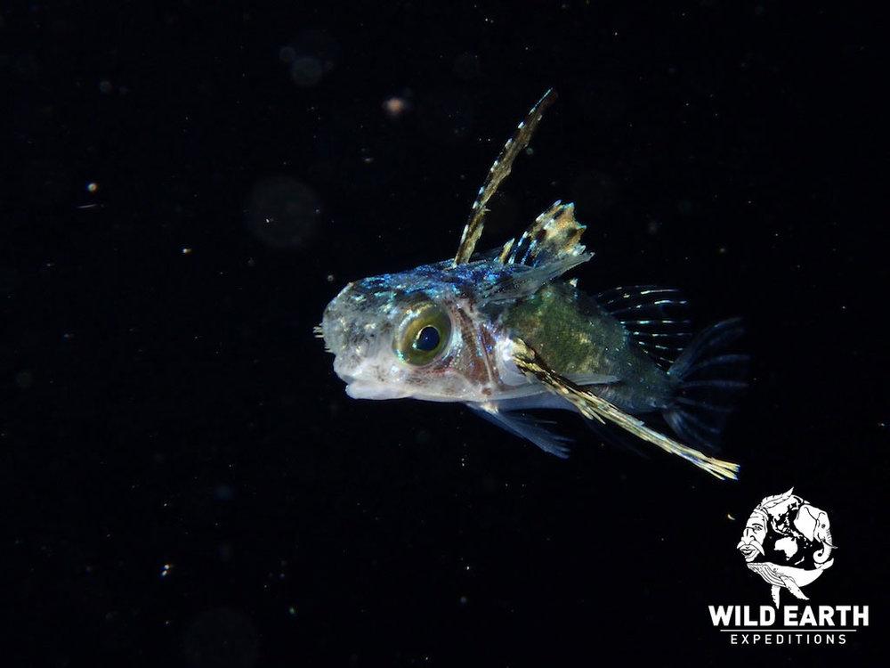 PLW_Turtle-Cove-UW-Black-Water-Dive-©18-Robin-Aiello-017.jpg
