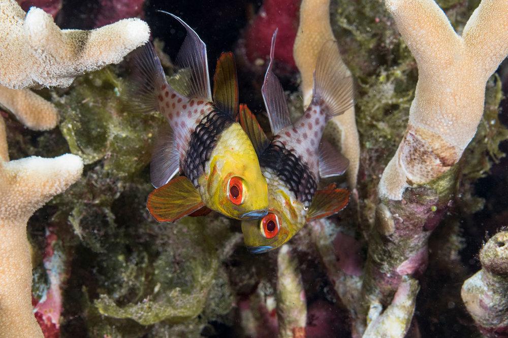 IDN_Wakatobi-Resort-Reef-©-Wakatobi-Resort-063.jpg