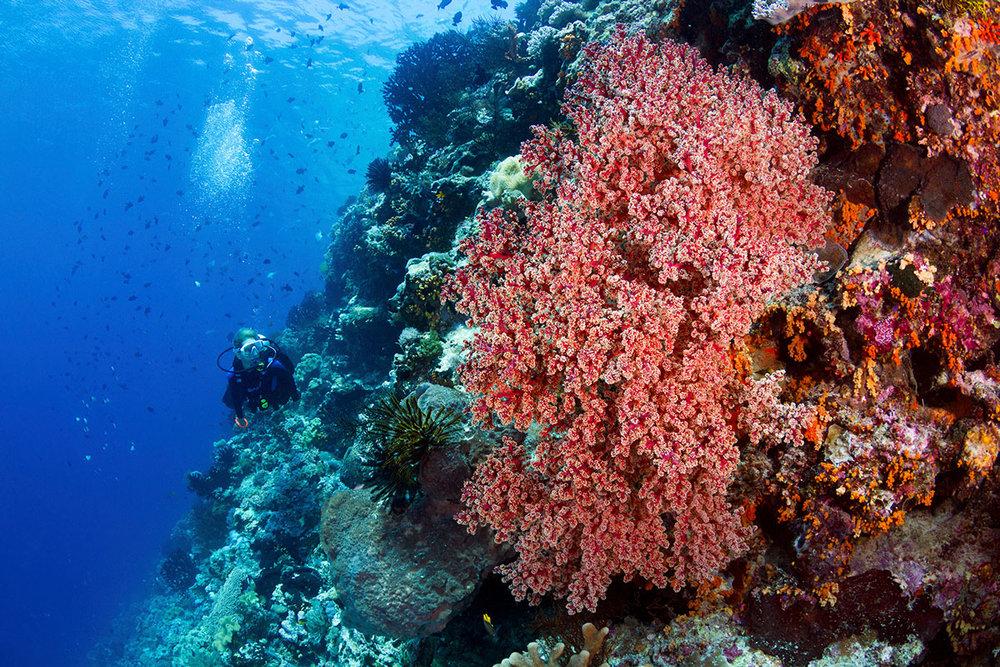 IDN_Wakatobi-Resort-Reef-©-Wakatobi-Resort-WS007.jpg