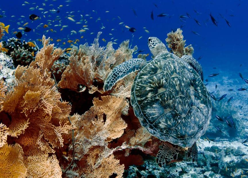 alphonse-island-marinelife-turtle-3.jpeg
