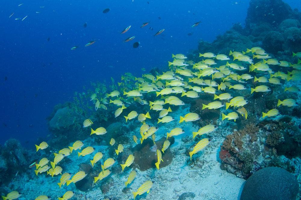SYC_uw-Aldabra-©08-Thomas-Baechtold-0079.jpg