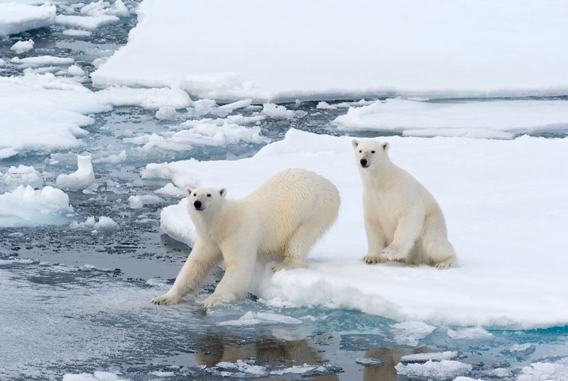NOR_Svalbard-Polar-Bears-on-Ice-©-AdobeStock_17576711.jpg