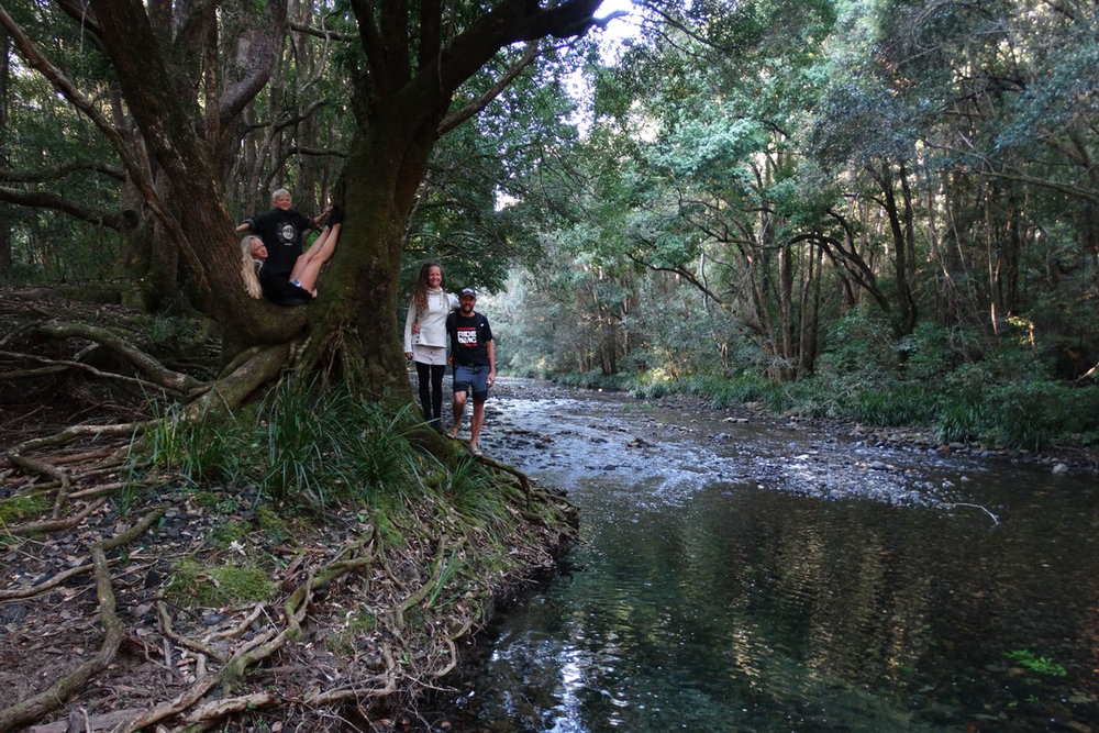 Daintree Forest - Australia - Wild Earth Expeditions