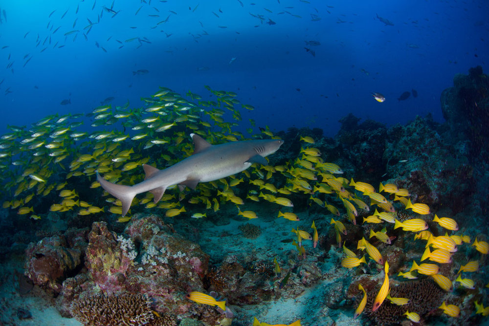Great Barrier Reef - Australia - Wild Earth Expeditions