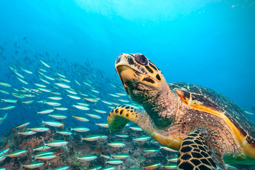SYC_Seychelles-UW-Turtle-©-Adobe-Stock_121709695.jpg