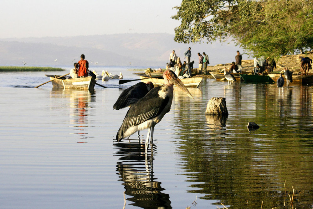 ETH_Birds-Awassa-Fish-Market-©-Dinkesh-Ethiopia-Tours.jpg