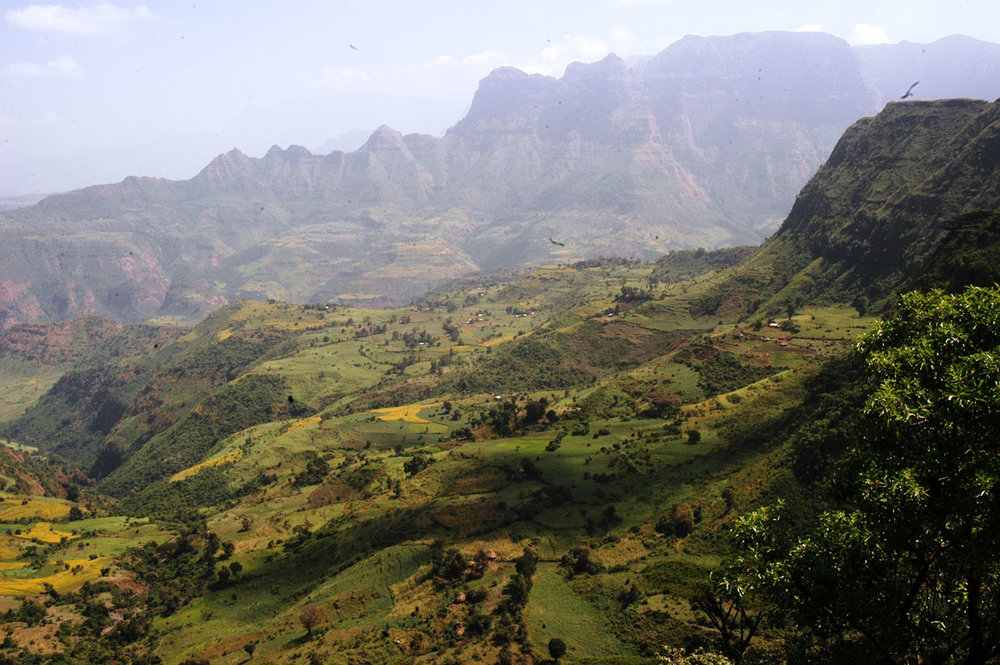 ETH_Simien-Mountains-©-Dinkesh-Ethiopia-Tours-008.jpg