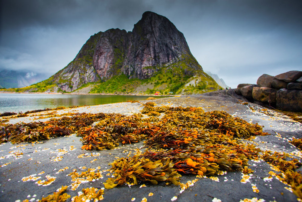 NOR_Lofoten-Islands-©-AdobeStock_231732153.jpg