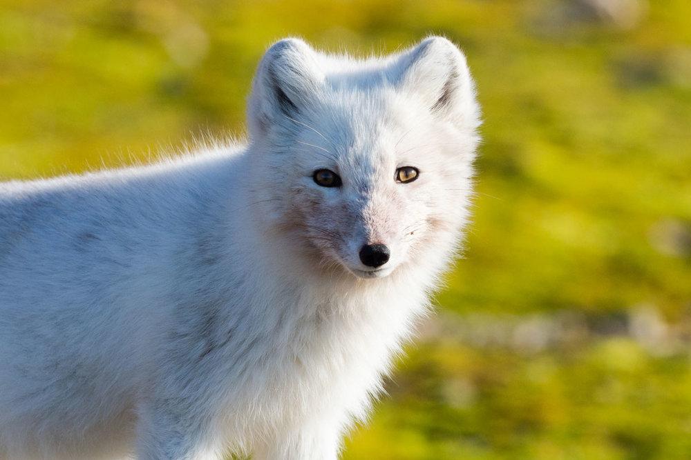 NOR_Svalbard-MS-Stockholm-©-Niklas-Nilsson-001.jpg