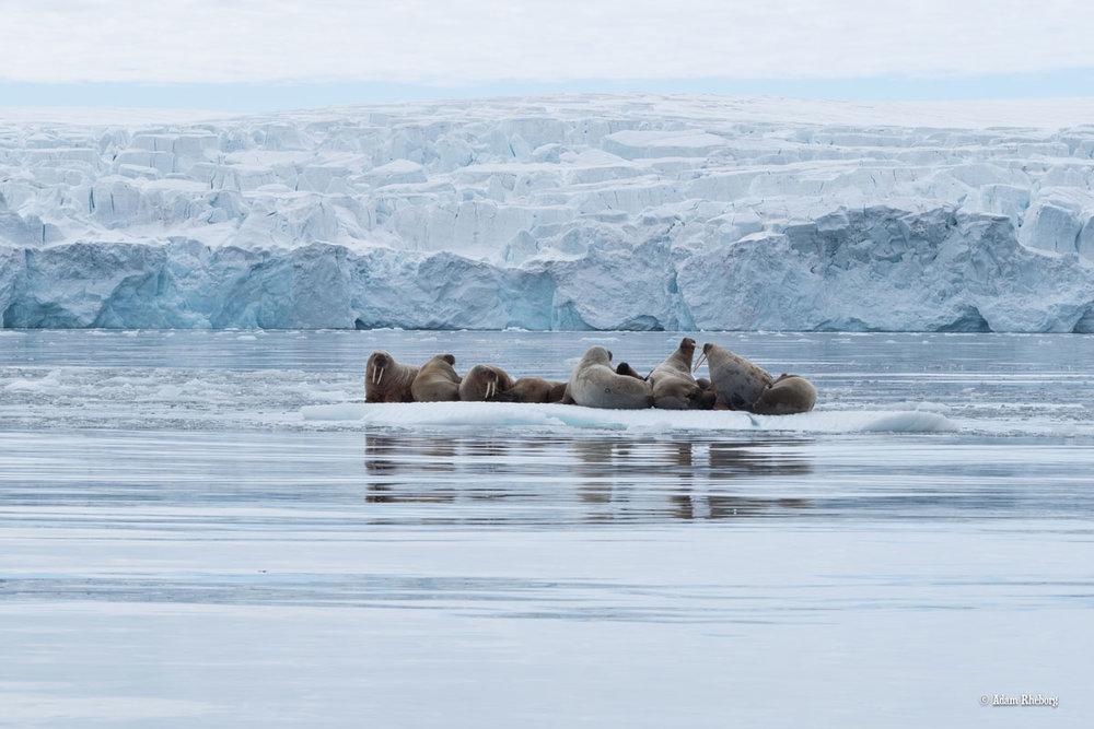 NOR_Svalbard-©Adam-Rheborg-©-Adam-Rheborg-2018-7060433.jpg