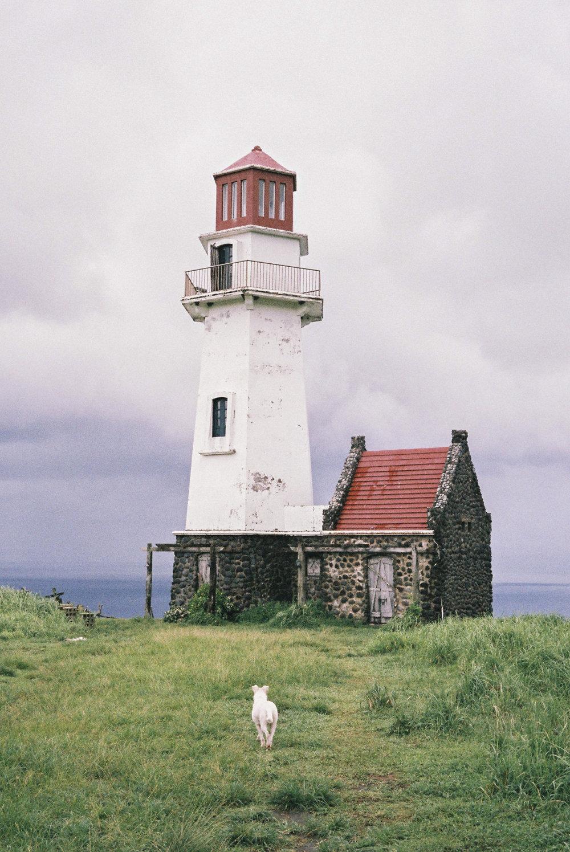 Lighthouse_dog.jpg