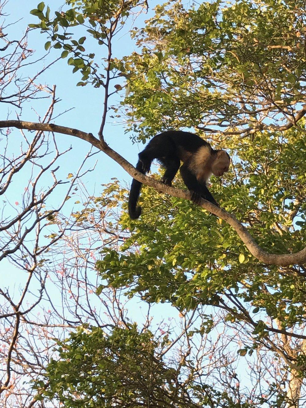 monkey.jpeg