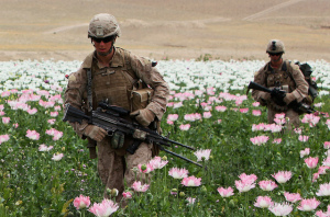 U.S. soldiers in a poppy field in Afghanistan, the main ingredient for the production of heroin. Source: Flickr Creative Commons via U.S. Marines.