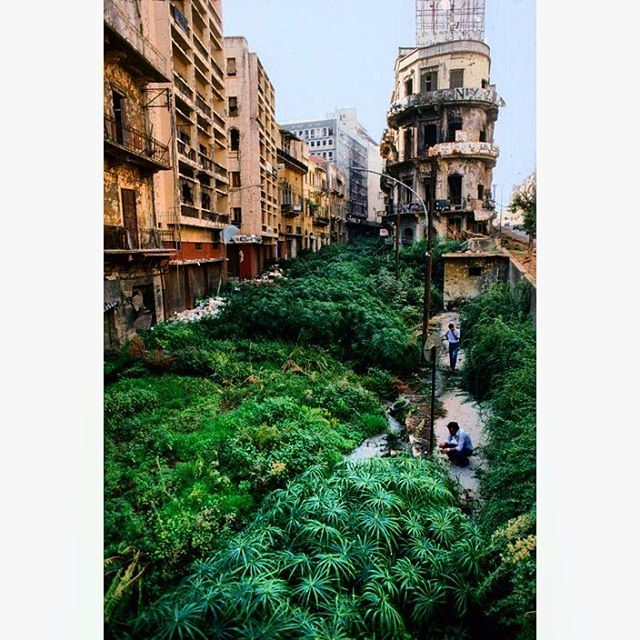 The Green Line, literally named because of the line of foliage that grew as the space was uninhabited, which divided Beirut between the eastern part controlled by the Christians and the western part controlled by the Muslims during the civil war. (Photo by Steve McCurry, National Geographic, February 1983)