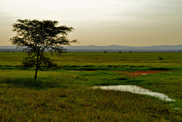 Gorongosa National Park in Mozambique. Photo by:  F Mira
