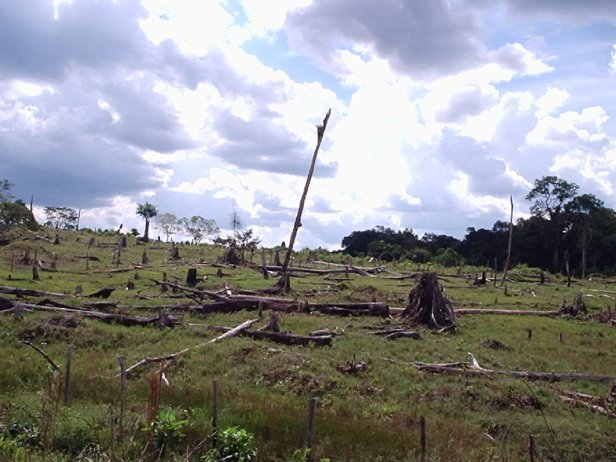 Deforestation in the Brazilian Amazon, on the Colombian and Venezuelan border. Photo by: Daniele Gidsicki