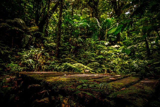 Costa Rican forest. Photo by: Ramon - Flckr Commons