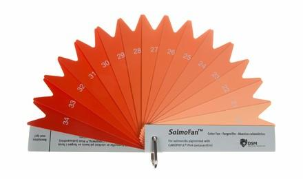 The SalmoFan, a color fan that allows salmon farmers to select the exact shade of pink in their salmon's flesh. Photo Source:    DSM   .