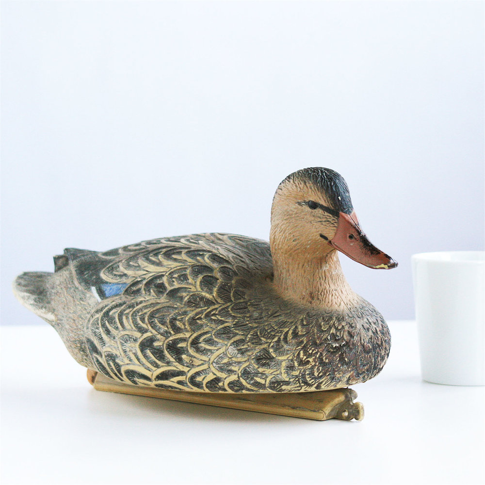 Taxidermy. Animal related.