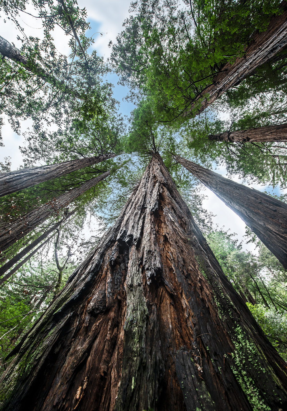 Ah the famous Redwoods. Right outside of San Francisco. This place truly amazed me, I've never felt so small and captivated at the same time. A place of beauty, of growth and history if you ever have the chance to visit them I beg that you take it.