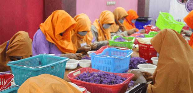 Rumi employees at processing facility.