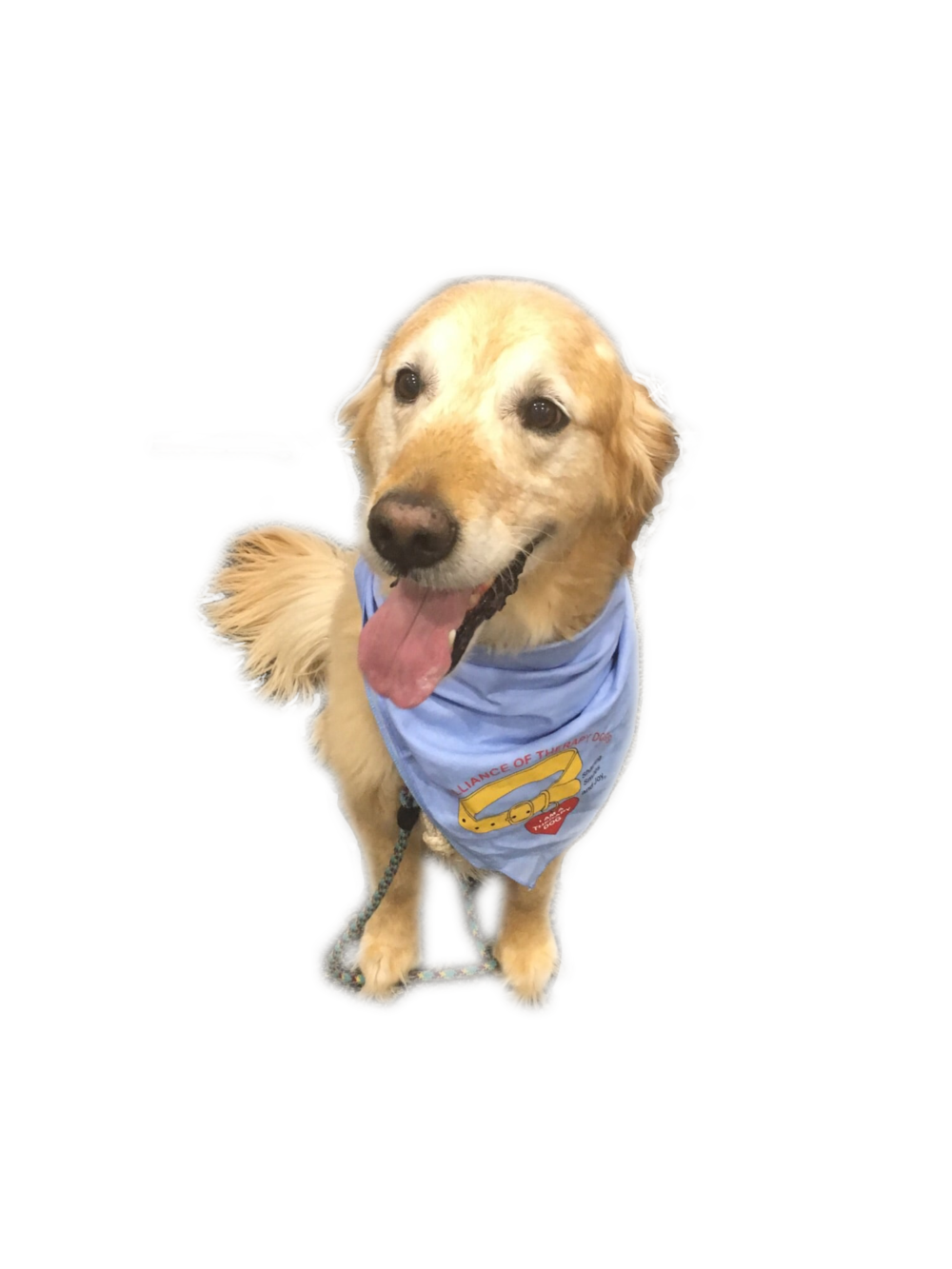 Comfort dog Wrigley is welcoming face for students at EC. Picture by Mallory Gross.