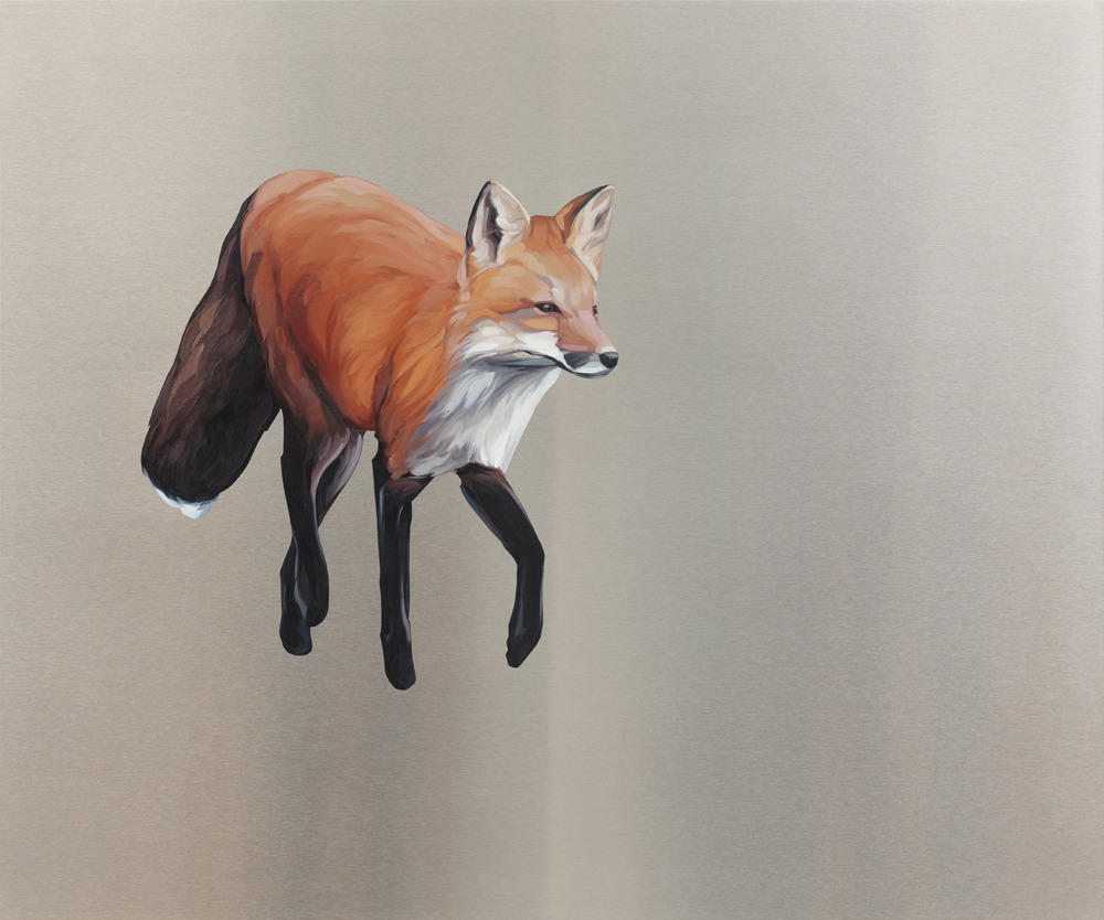 Looking (Red Fox) . Oil on stainless steel, 30in x 36in. $2,500
