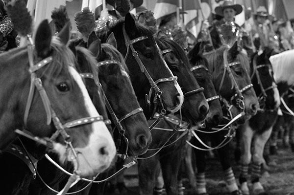 horses-faces.jpg