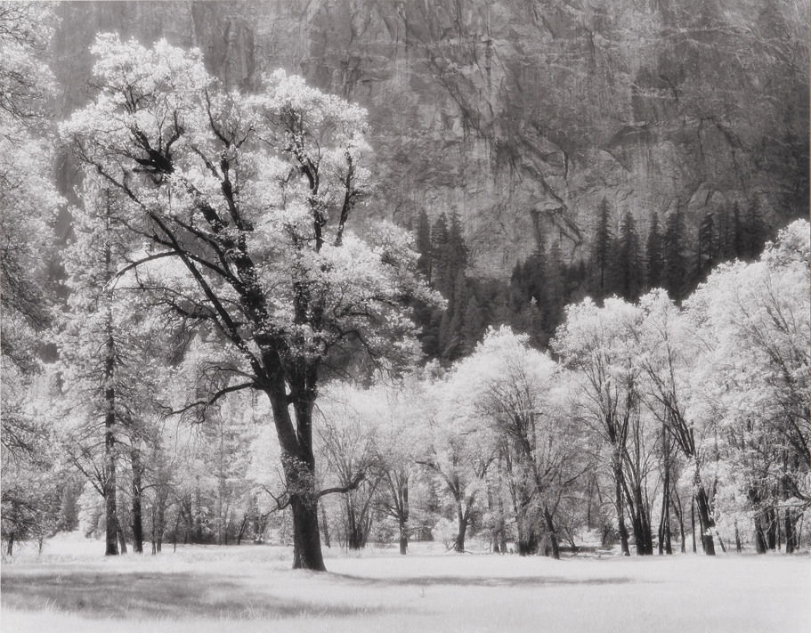 Ansel's Oak Tree, Yosemite National Park, CA, 1992
