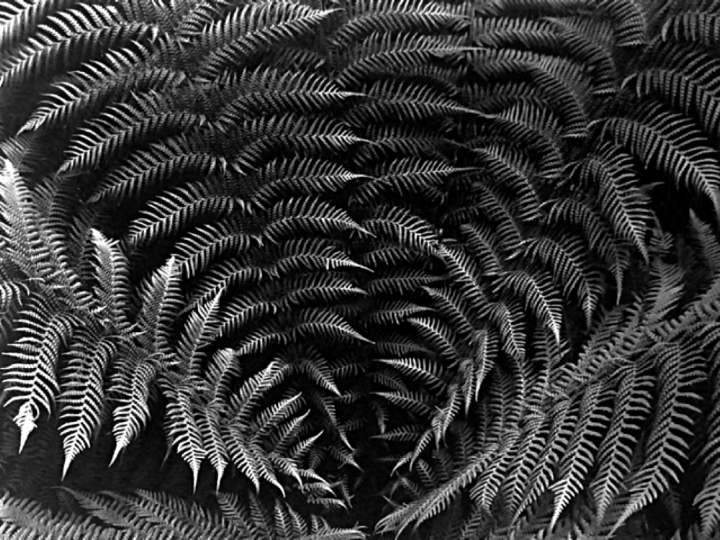 First Fern Photo, 2017