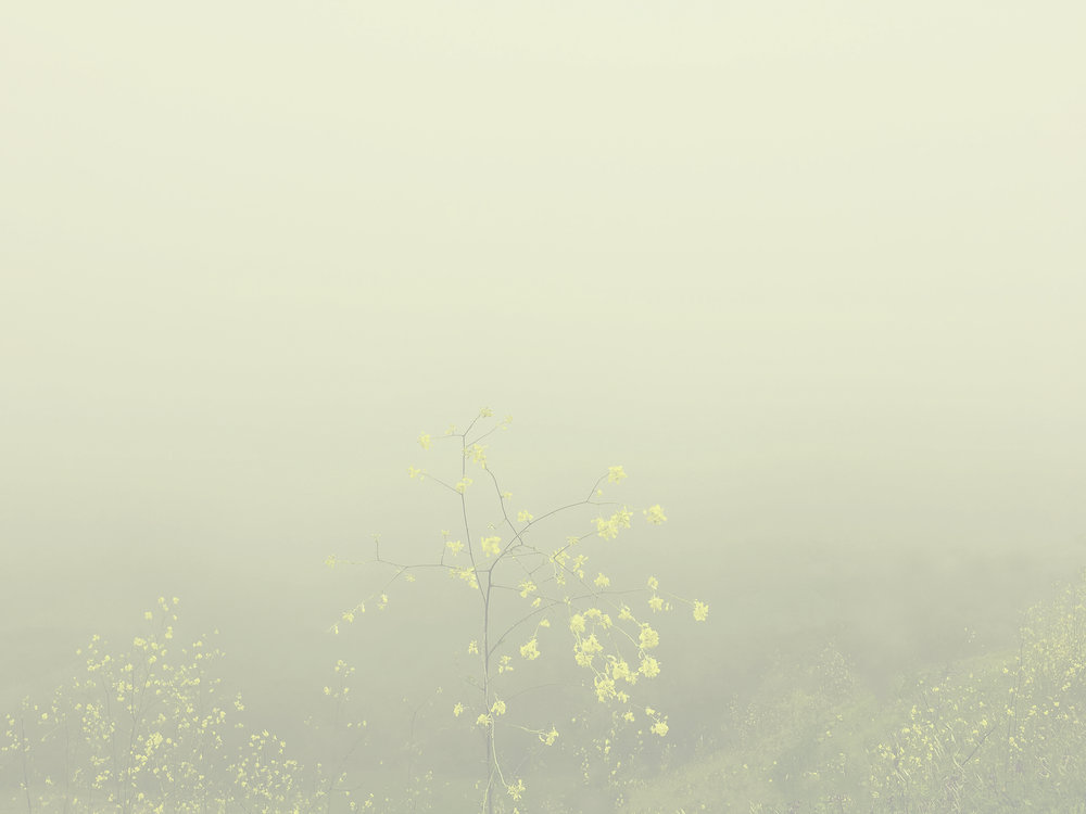 "Alice Hargrave,  Yellow Drift , Pigment print, 2017, 23"" x 30.5"""