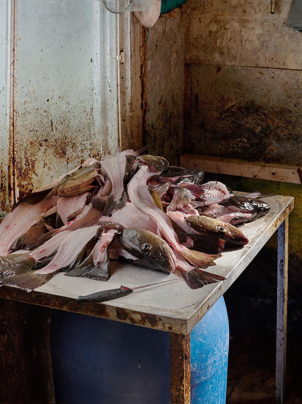Cleaning Cod, Greenspond, Newfoundland , 2017, archival inkjet print