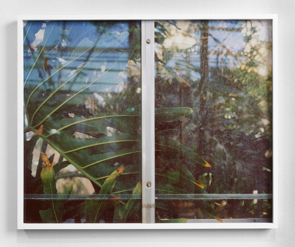 Window with Plant,  2014, Acrylic, Unique Pigment Print, Aluminum, Museum Board