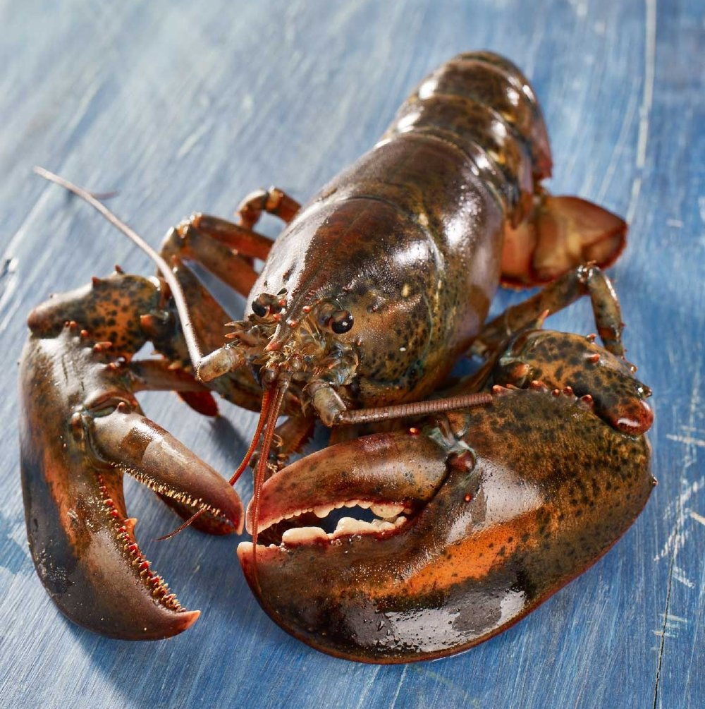 Maine_Lobster_2016-02-24_Recipes_Selects_020.jpg
