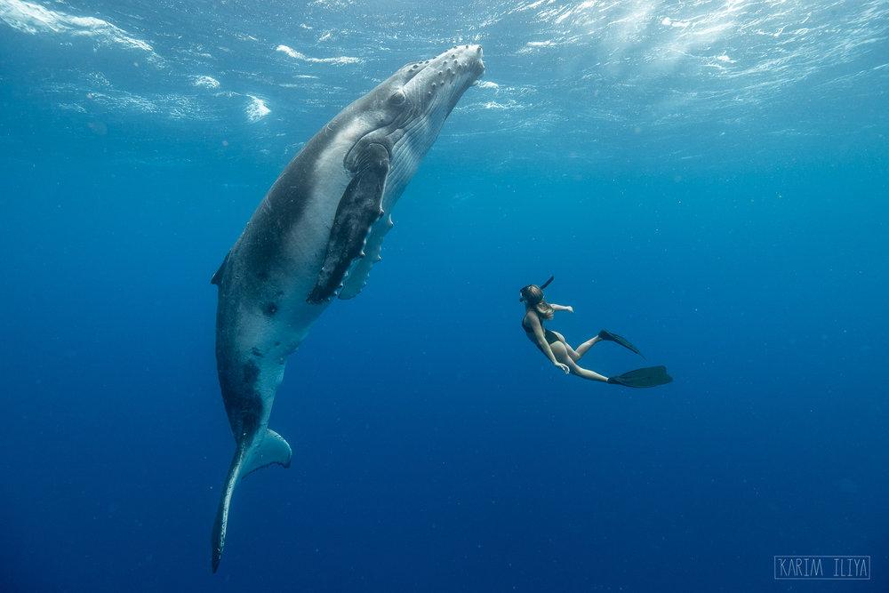 Swim-with-whales-tonga.jpg