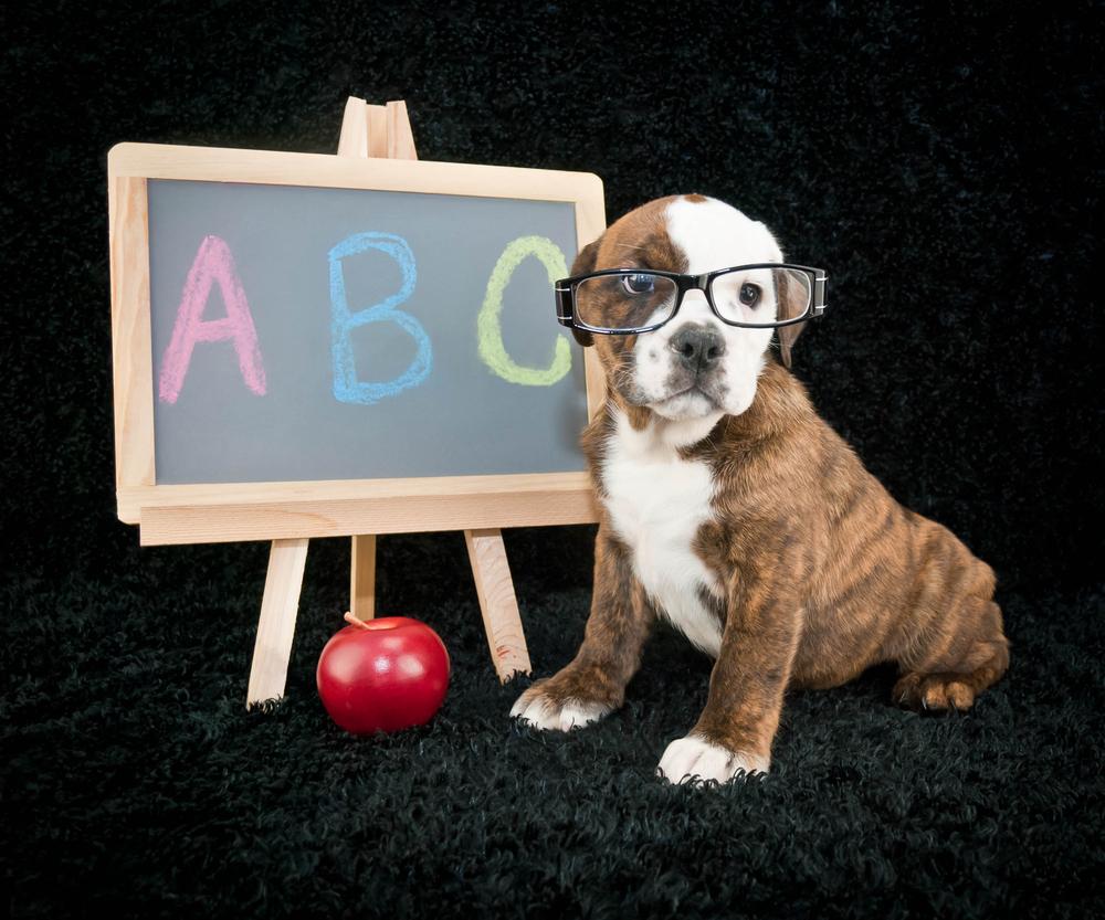 back to school puppy.jpg