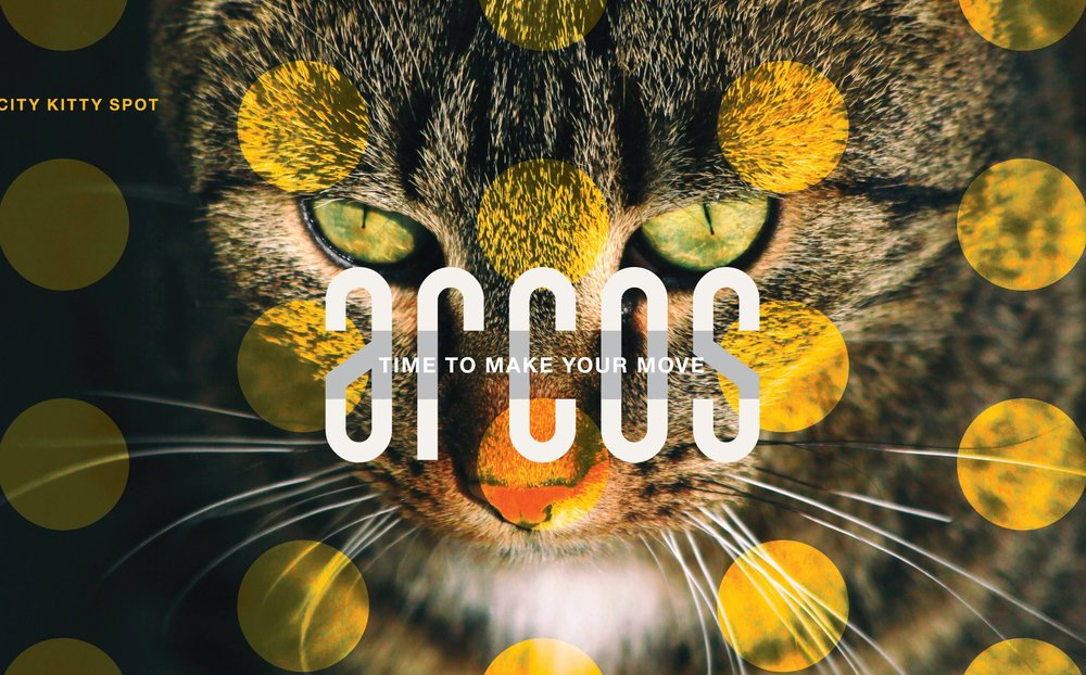 Copy of Arcos-Sarasota_city-kitty