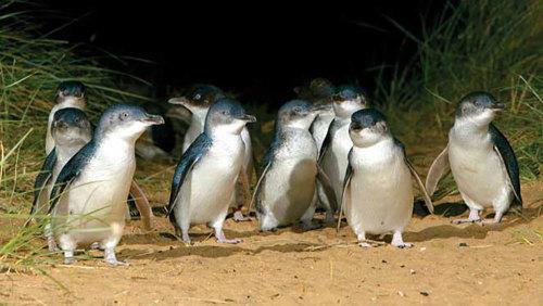 mbt6_penguins_direct_02.jpeg