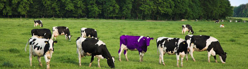 purple cow... where you at!?