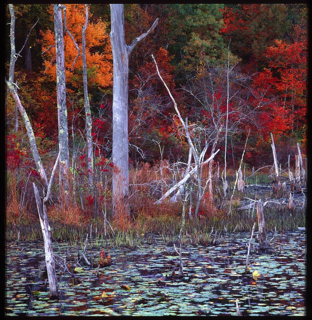 Conn Swamp- Landscape 4X6.jpg