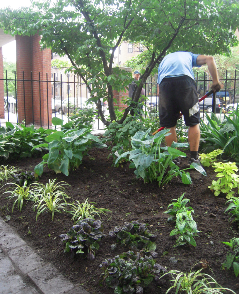 Mahoney's landscaping crew creating entry-side garden in Library Park