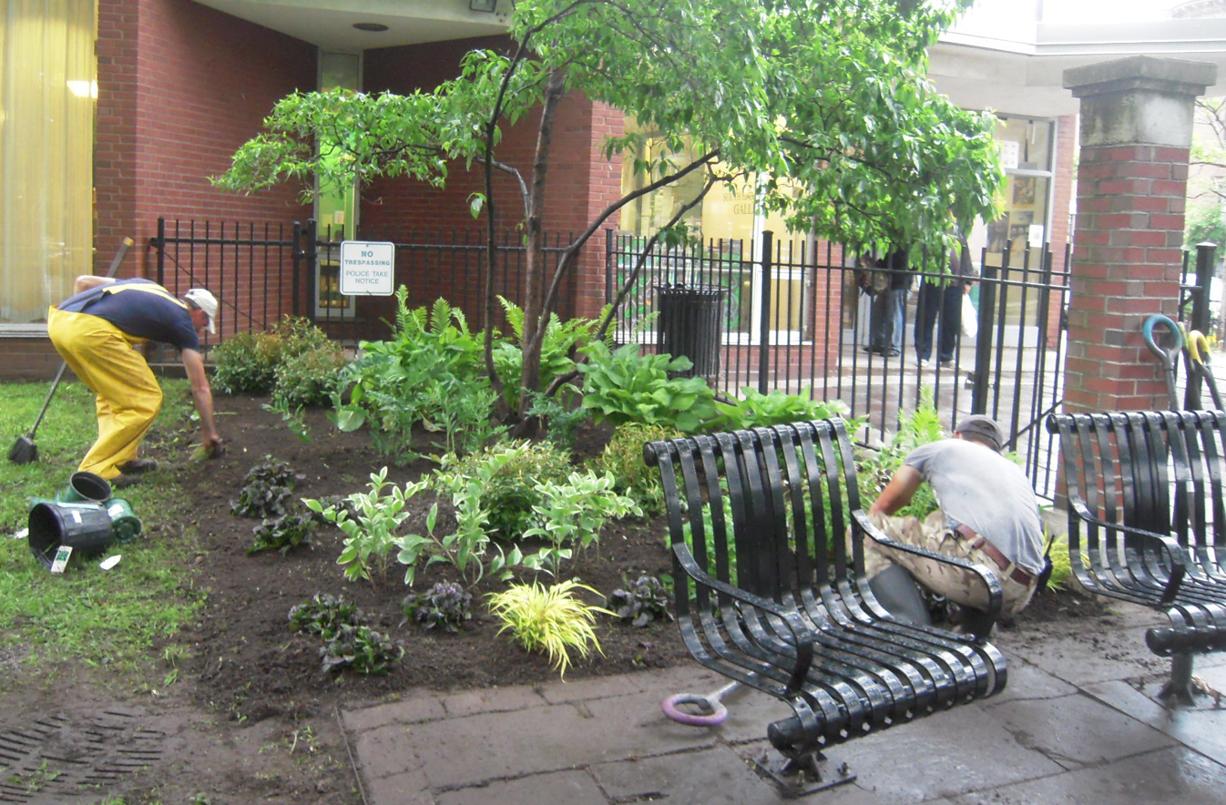James Hohmann of Mahoney's Garden Center checking on recent plantings in Library Park