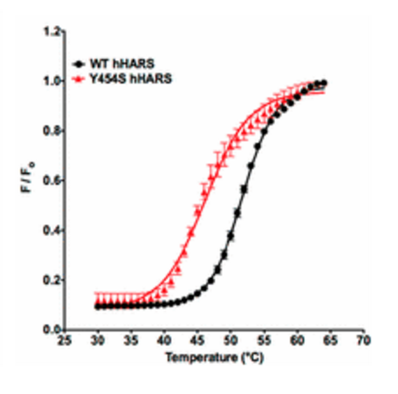 A graphical representation depicting temperature variation between the wild-type and mutant version of the HARS enzyme.