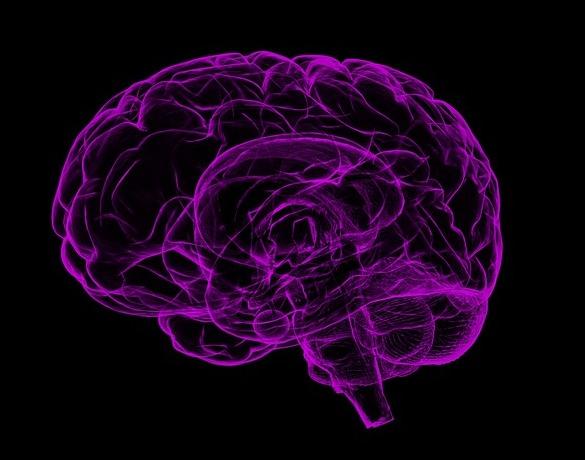 brain and memory.jpg
